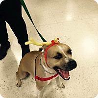 Adopt A Pet :: Samson - Las Vegas, NV