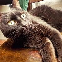 Adopt A Pet :: Raisin - Park City, UT