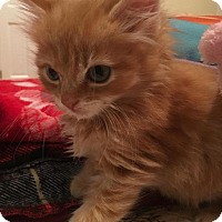 Adopt A Pet :: Jessie - River Edge, NJ