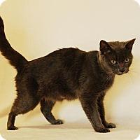 Adopt A Pet :: Sangria - Toccoa, GA