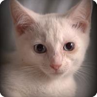 Adopt A Pet :: Blueberry - Staunton, VA