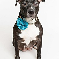 Adopt A Pet :: Minerva - Jefferson, LA