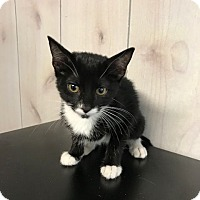 Adopt A Pet :: Jenny - Porter, TX