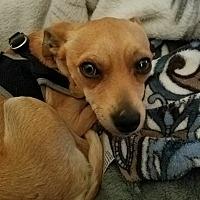 Adopt A Pet :: SCAMP - Emeryville, CA