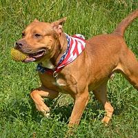Adopt A Pet :: Max - Palmyra, NE