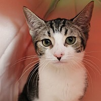 Adopt A Pet :: Rosie - Richmond Hill, ON