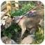 Photo 3 - Dachshund/Chihuahua Mix Dog for adoption in Warren, New Jersey - Chunkie