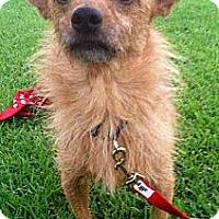 Adopt A Pet :: Toby - Baton Rouge, LA