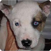 Adopt A Pet :: Bud - Washington, NC