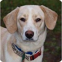 Adopt A Pet :: Tyler - Toronto/Etobicoke/GTA, ON
