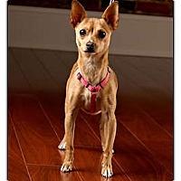 Adopt A Pet :: Sandy - Owensboro, KY