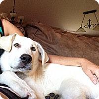 Adopt A Pet :: Jack - Plainfield, IL
