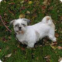 Adopt A Pet :: Frosty - Rigaud, QC
