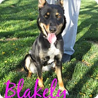 Adopt A Pet :: Blakely - Scottsdale, AZ