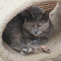 Adopt A Pet :: LITTLE MARIA - San Pablo, CA
