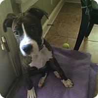Adopt A Pet :: CASEY - Nashville, TN