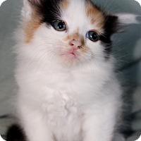 Adopt A Pet :: Sunny - Jefferson, NC