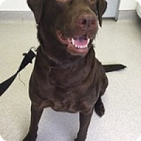 Adopt A Pet :: Chloe 3 - Torrance, CA