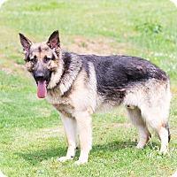 Adopt A Pet :: Jason - Dacula, GA