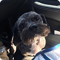 Adopt A Pet :: Greyson (GAPR/Fostered in TN) - Brighton, TN