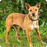 Adopt A Pet :: Mona - Clarkesville, GA
