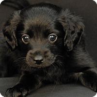 Adopt A Pet :: Ringo - Newland, NC
