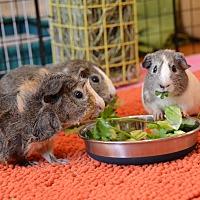 Adopt A Pet :: Gwendolyn, Peyton and Dylan - Brooklyn, NY
