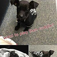Adopt A Pet :: Sammie - Marlton, NJ