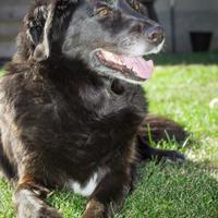 Adopt A Pet :: Stella - Sherwood Park, AB