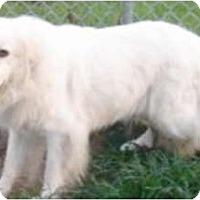 Adopt A Pet :: Tinker - Bloomington, IL