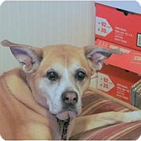 Adopt A Pet :: Photon - Chandler, AZ