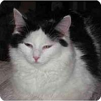 Adopt A Pet :: Sweetheart - Duncan, BC