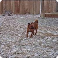 Adopt A Pet :: Yoshi - Irvington, KY