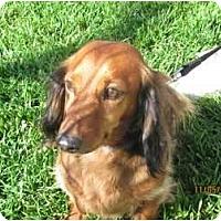 Adopt A Pet :: Teddy - Garden Grove, CA