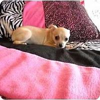 Adopt A Pet :: Matilda - Glastonbury, CT