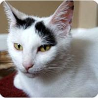 Adopt A Pet :: Bunny - Xenia, OH