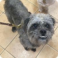 Adopt A Pet :: Lenny - Oak Ridge, NJ