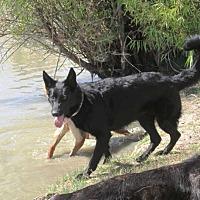 Adopt A Pet :: Roxy - Pleasant Grove, CA