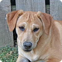 Adopt A Pet :: Sheldon - in Maine - kennebunkport, ME