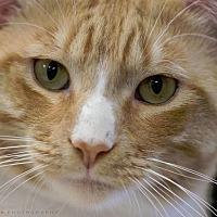 Adopt A Pet :: SEAN - Houston, TX