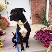 Adopt A Pet :: Riddick - Cumberland, MD