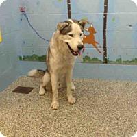 Adopt A Pet :: URGENT on 7/22 SAN BERNARDINO - San Bernardino, CA