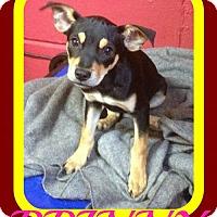 Adopt A Pet :: PRINNY - Sebec, ME