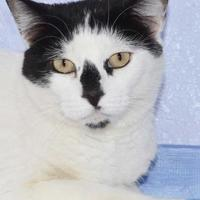 Adopt A Pet :: Milk Dud - Grand Junction, CO