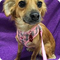 Adopt A Pet :: Brandy - Tracy, CA