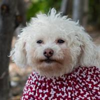 Adopt A Pet :: Becca - Itasca, IL