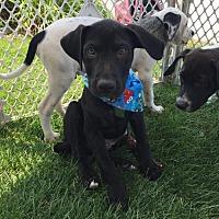 Adopt A Pet :: Alfalfa - St. Bonifacius, MN