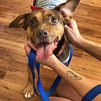 Adopt A Pet :: Abby - Franklin, TN
