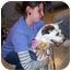 Photo 3 - Australian Cattle Dog/Australian Shepherd Mix Dog for adoption in Olive Branch, Mississippi - Faddy Paddy