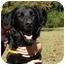 Photo 1 - Setter (Unknown Type) Mix Dog for adoption in Thomaston, Georgia - Smiley